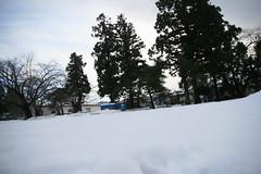 IMG_0918 (shinyai) Tags: snow japan aomori hirosaki