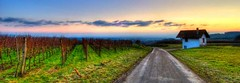 Shack (Birgit-Cathrin  Duval) Tags: road sky nature landscape wideangle vineyards shack hdr theshack