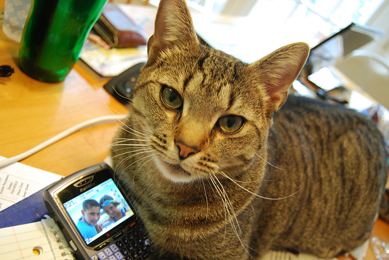 I Can Haz Blackberry