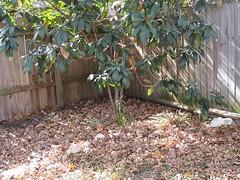 Leaves 2008-2009