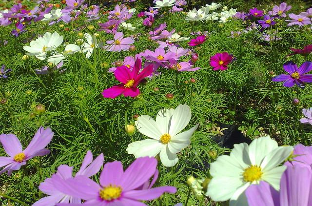 Jardin bot nico la laguna el salvador for Plantas ornamentales para parques