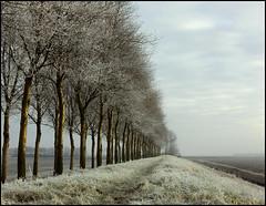 POINT OF NO RETURN (ESOX LUCIUS) Tags: winter light holland hoarfrost taco goereeoverflakkee mooiflakkee kraaienissedijk