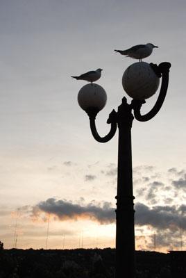 lakewalk birds