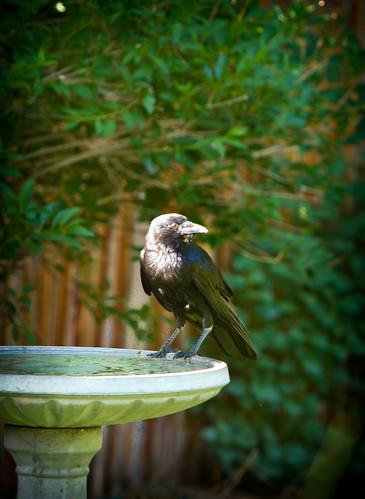 Damn Big Blackbird! 40.365 TeamPhotoBlog by dhgatsby