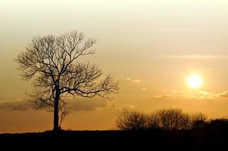 Winter sun, Picardie, Oise, France