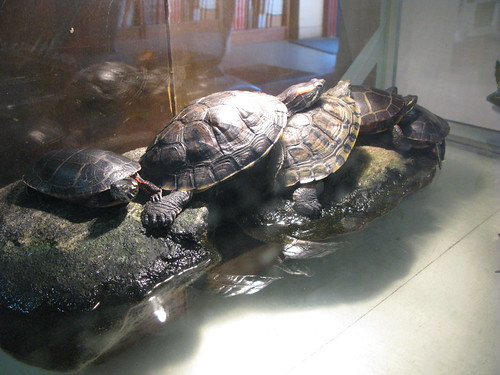 Book Barn turtles