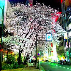 GINZA sakura another color