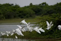 Point Calimere Bird Sanctuary
