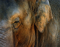 Eye to Eye (April Rain Photography) Tags: flickrsbest abigfave jalalspagesanimalkingdom earthtouchcom