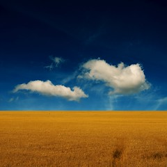 Life Is Simple (Olli Keklinen) Tags: blue color field yellow clouds photoshop square landscape nikon scenery horizon 100v10f d200 2008 gettyimages goldenratio palabra themoulinrouge 500x500 bsquare mywinners ok6 platinumphoto ollik alemdagqualityonlyclub 20080412 100commentgroup saariysqualitypictures