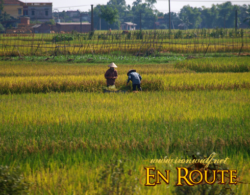 Passing Rice Field view