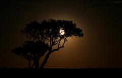 Sol da meia noite (fasciata) Tags: moon portugal midnight lua alentejo aljustrel