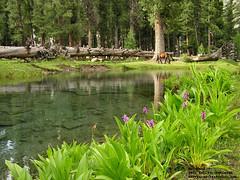 Mahodand Lake (tanveersattar) Tags: travel flowers pakistan nature pond meadows swat