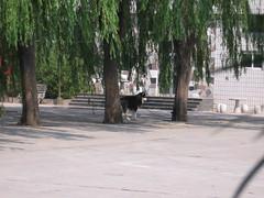 China-0431
