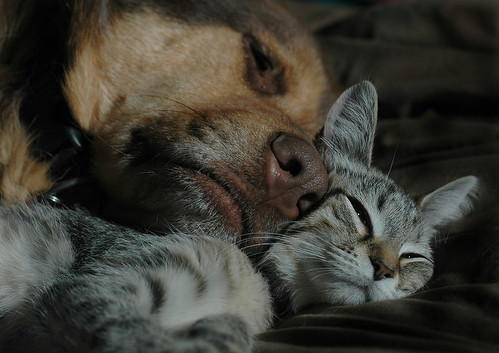 cute kitten and dog love cat pic