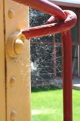 cotton web