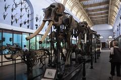 Elephant speciman