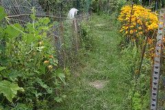 freshly wacked garden path