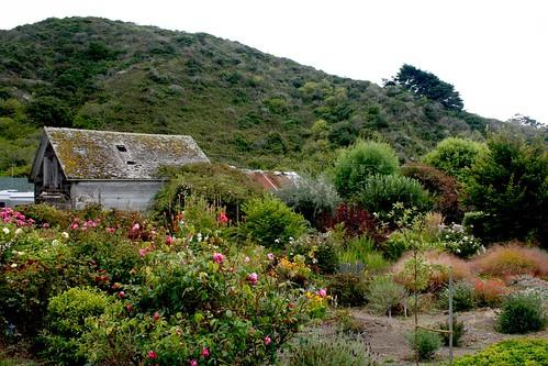 Pescadero Garden