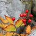 sabrina basin berry.jpg