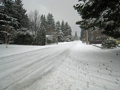 December Snow in Edmonds