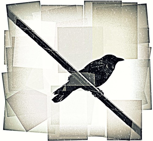 thirteen ways of looking at a blackbird theme