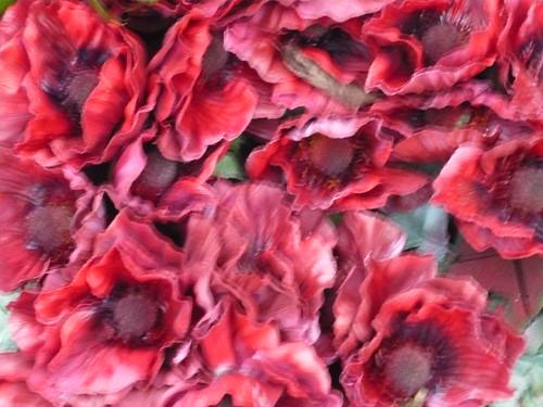 11.11.Poppies