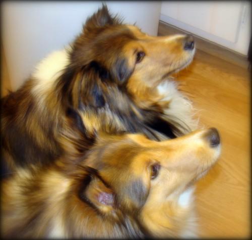 Ava & Ellie