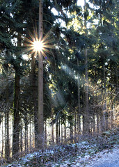 Wintersonne (dolorix) Tags: light forest germany deutschland licht wald sonnenstrahlen siebengebirge lberg