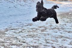 skippy flying