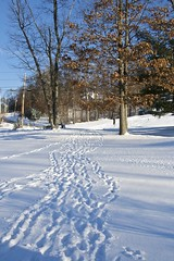 Front Yard Footprints in the Snow
