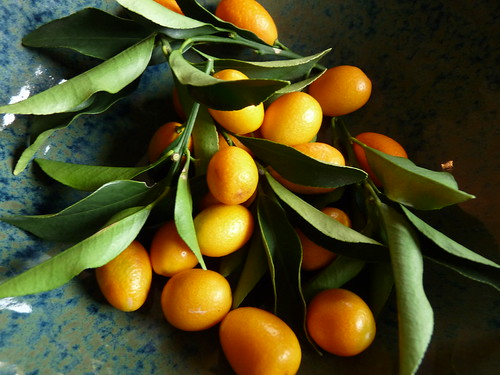 kumquat season!