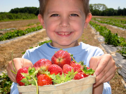 Strawberry Picking-4