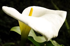 White beauty (the shot of life) Tags: detail oaxaca naturnature blumenflowers sanjosdelpacifico mexikomexico weiswhite lateinamerikalatinamerica blteblossombloom knuthildebrandtdigi046011jpg