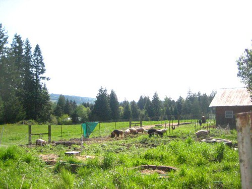 Pokrov Farm