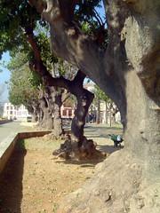 Plaza Lorenzo Villalonga