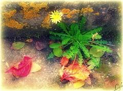 Just A Try... Don't Die... (Kuzeytac) Tags: life red urban orange flower color colour macro green texture nature yellow wall turkey geotagged trkiye turkiye istanbul makro geotag leyla doku bahar iek yeil sar lsi duvar hzn krmz doa tabiat hpphotosmartm425 kuzeytac copyrightedallrightsreserved aqualityonlyclub