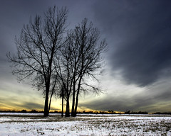 Stand Alone (briankosena) Tags: trees winter colorado denver denvercolorado cherrycreekstatepark outstandingshots abigfave aplusphoto diamondclassphotographer goldstaraward