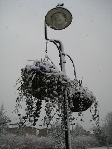 Park Lantern in the Snow