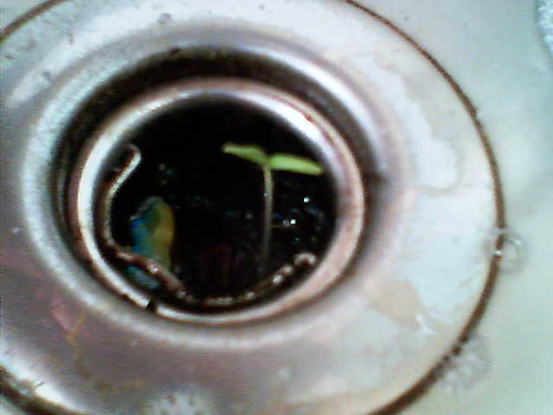 sink_sprout1