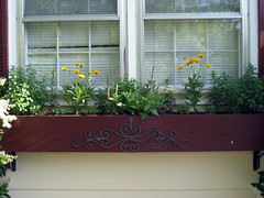 perennial flowerbox