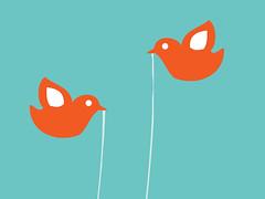 Twitter Birds, Close Up