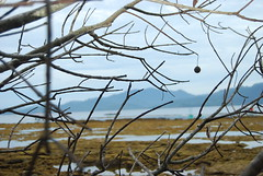 twig and fruit