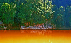 Manambolo colors (Z Eduardo...) Tags: africa trees nature water colors forest reflections river island ligth madagascar colorphotoaward manambolo llovemypics mygearandme mygearandmepremium mygearandmebronze