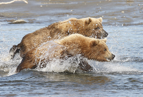 Fishing Cubs_Q2E4673