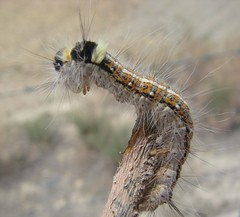 Kerm (BeHiNaZ) Tags: animal animals insect alone worm worms sunnyday insecta  kerm pashmaloo