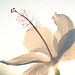 sun flower by bankgrrl