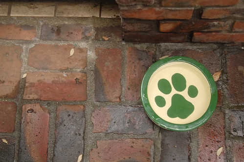 給狗狗的水盆