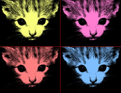 colors (natalia*) Tags: color colors cuatro kittens gatos colores gato contraste miau imanes