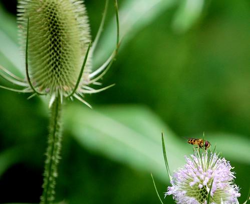 Bee Along Pine Creek Trail